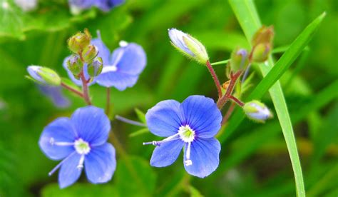 mooie bloemen afbeeldingen grappige afbeeldingen afbeeldingen van bloemen blauwe