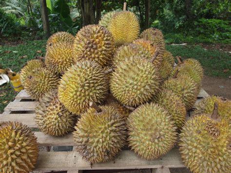 file durian jpg wikipedia