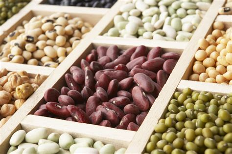 whole grains pros and cons the pros and cons of a plant based diet humanitas net