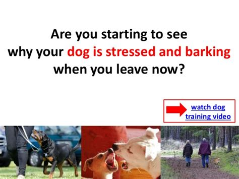 dog barks when we leave how to stop your dog from barking