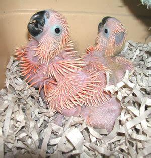 aves international nursery photos 2002 page three