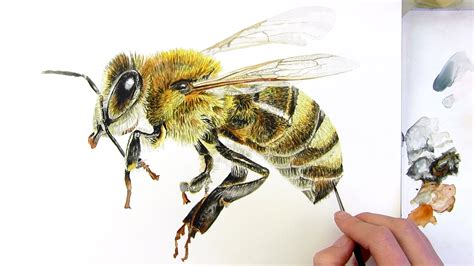 how to paint a realistic honey bee in watercolor