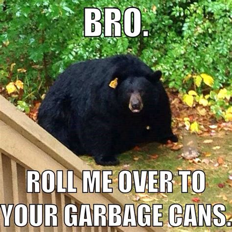 Bears Memes - obese black bear weknowmemes