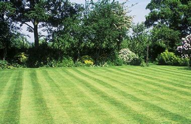 Course On Lawns What You Should by Create Your Garden Part 5 Lawns Telegraph