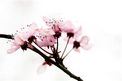 achtergrond bloemen rustig de lente fotograferen digitale fotografietips