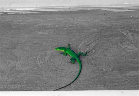 imágenes en blanco y negro con un toque de color c 243 mo crear una foto blanco y negro con un toque de color