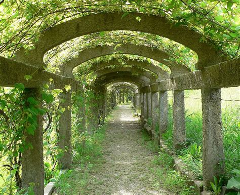 Garden Arch For Grapes Grape Arbor Arbors Grape Arbor And Walkways