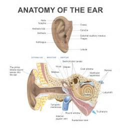 what it looks like when you rupture your eardrums news