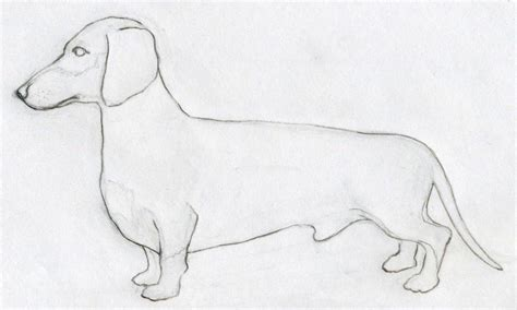 how to draw a puppy how to draw