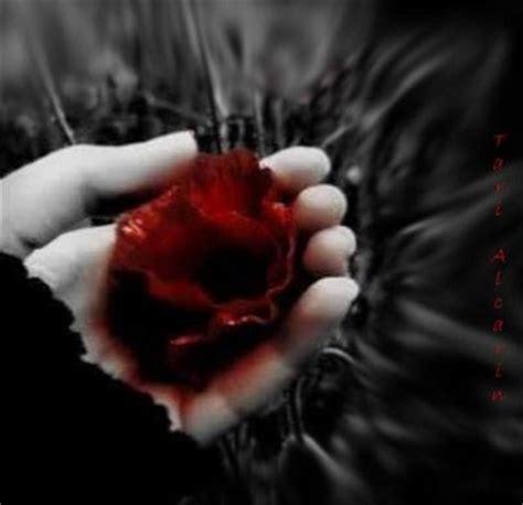 imagenes de flores tristes imagenes de rosas negras con frases tristes
