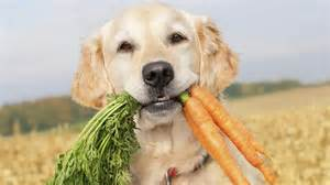 can dogs eat raw carrots ask com