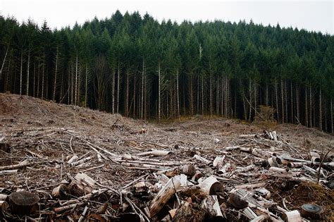 clear tree deforestation quotes 39 quotes on deforestation science