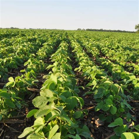 Can Soybeans Be Planted To Detox Land by Usda Sees Record High U S Soy Acres More Corn In 2018 19