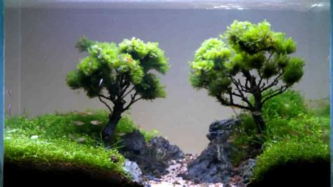 bonsai aquascape bonsai aquascape 28 images 35l bonsai paludarium