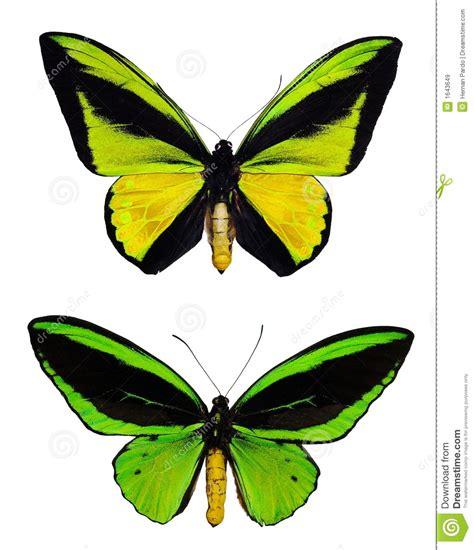imagenes mariposas libres mariposa verde im 225 genes de archivo libres de regal 237 as