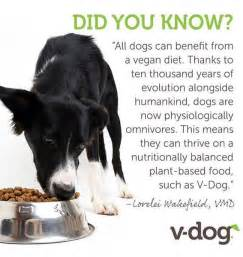 vegan diet for dogs veganism a whose time has come what every vegan needs to to optimize