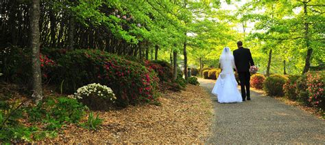 Wedding Ceremony Blue Mountains by Blue Mountains Marriage Celebrant Wedding Ceremony Services