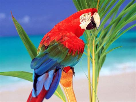 colorful parrot wallpaper colorful parrot portrait on branch wallpaper 1024 215 768