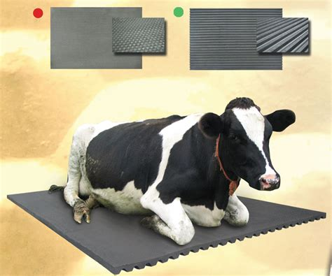 ireland rubber cow matting rubber mat adw title ad4 hacked by mohamed xo adw div style ad0aig display none aciapga8