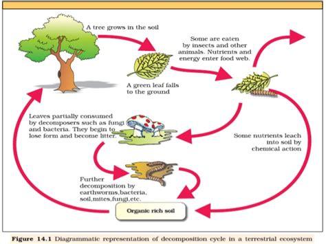 design management material oberfl 228 chen beratung von organic matter decomposition
