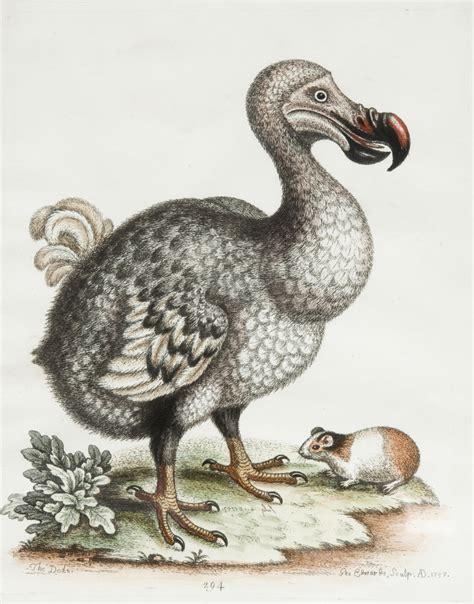 the dodo george edwards dodo ordeal