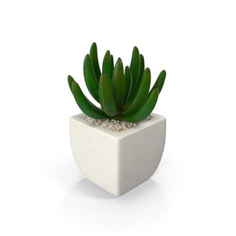 potted succulent plant png images psds