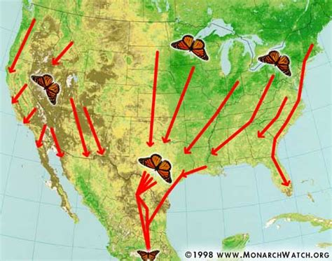 monarch watch migration tagging tagging monarch watch migration tagging fall migration