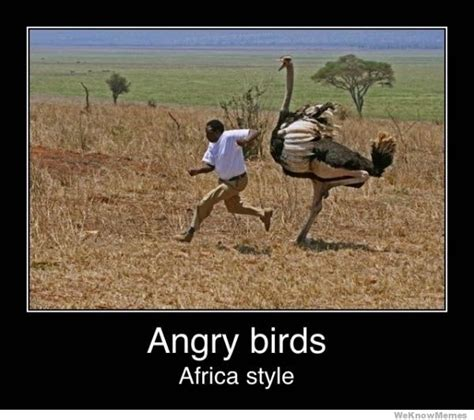 Most Hilarious Memes - top 20 most funny angry birds memes and jokes quotes