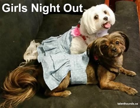 Girls Night Meme - weekend dog meme weekend dog meme when you raw dog a