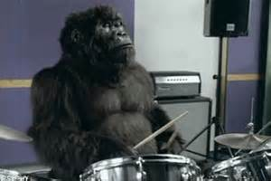 Wonderbra Recreates Cadbury Gorilla Advert For by Chimpanzee Astounds Scientists By Turning A Barrel Into A