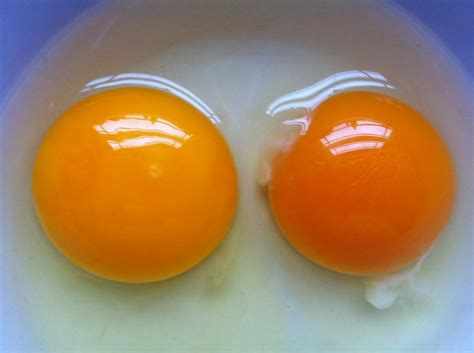 egg yolk color decoding egg yolk colour living malaysia
