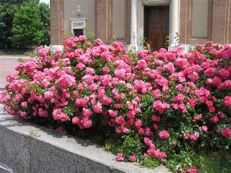 piccole aiuole fiorite aiuole fiorite a cernusco necessit 224 o eccessi psergio it