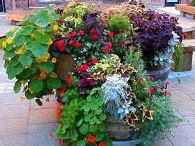 Landscaping Ideas Zone 8a 17 Best Images About Gardening Zone 8 Planter On