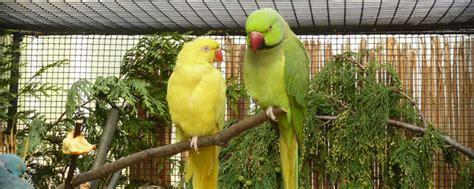 botanischer garten berlin vogelausstellung vogelausstellung im botanischen garten berlin