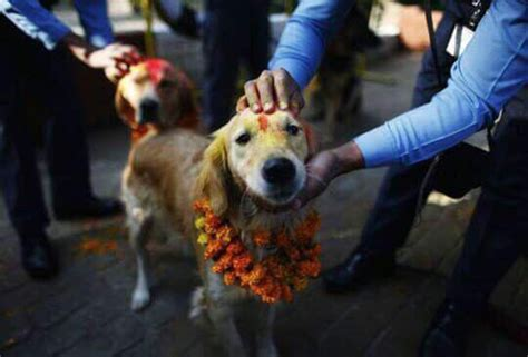 when your puppy worships you dogs get the royal treatment during this hindu festival in nepal