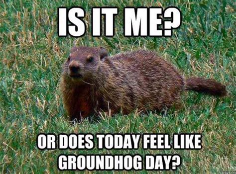 groundhog day 2016 zoo groundhog day 2016 zoo 28 images 2016 groundhog day at