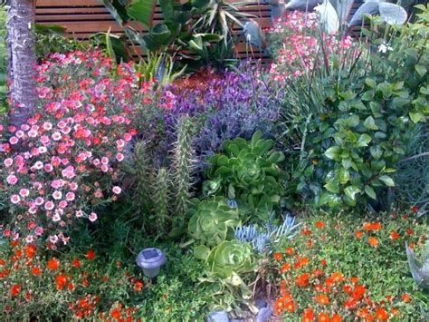 southern california drought tolerant landscaping drought tolerant plants southern ca landscape