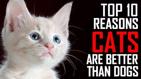 8 Reasons Why Dogs Are Better Than Cats by Top 10 Reasons Why Cats Are Better Than Dogs The Top List
