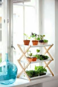 apartment plants ideas 17 best ideas about apartment plants on pinterest indoor