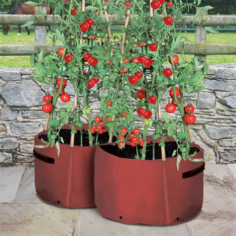 tomato patio planter haxnicks