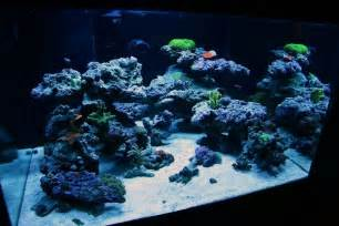 Reef Aquascaping Ideas top reef tank aquascapes current tank info 30x30x18 quot 70 gallon cube bonsai inspired open
