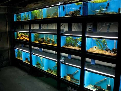 aquarium design network tanked multi tank stand neater than most aquarium stores