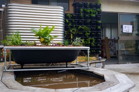 bathtub aquaponics making a diy bathtub aquaponics system milkwood