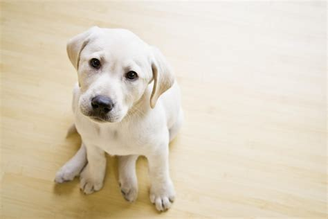 Best Flooring For Homes With Dogs by The 3 Best Wood Flooring Options For Homes With Dogs