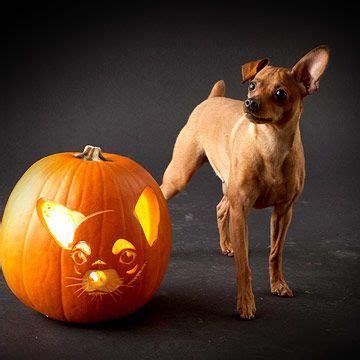 carve  pumpkin      dog