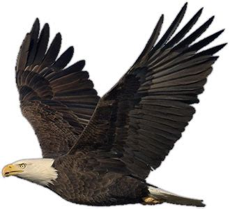 Humm3r Eagle Black With Real Pic gallery for transparent eagle clip references eagle bald eagle and bird
