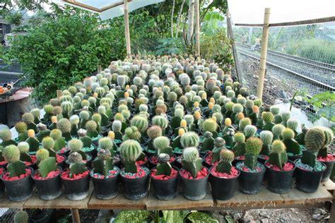 Pot Plastik Warna Warni Diameter 10 Cm adjie kaktus contoh souvenir kaktus mini jenis kaktus mini