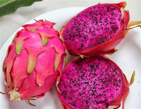 Benih Buah Naga Merah jual benih bibit buah naga merah fruit