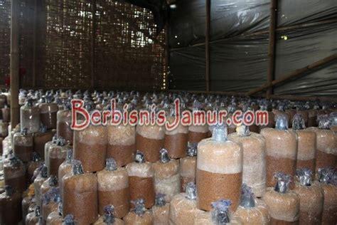 Termometer Kuping proses inkubasi baglog jamur tiram berbisnis jamur