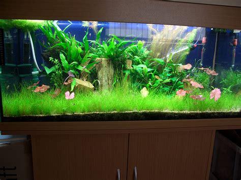 design my aquarium why is my fish tank cloudy aquariumpros inc minnesota